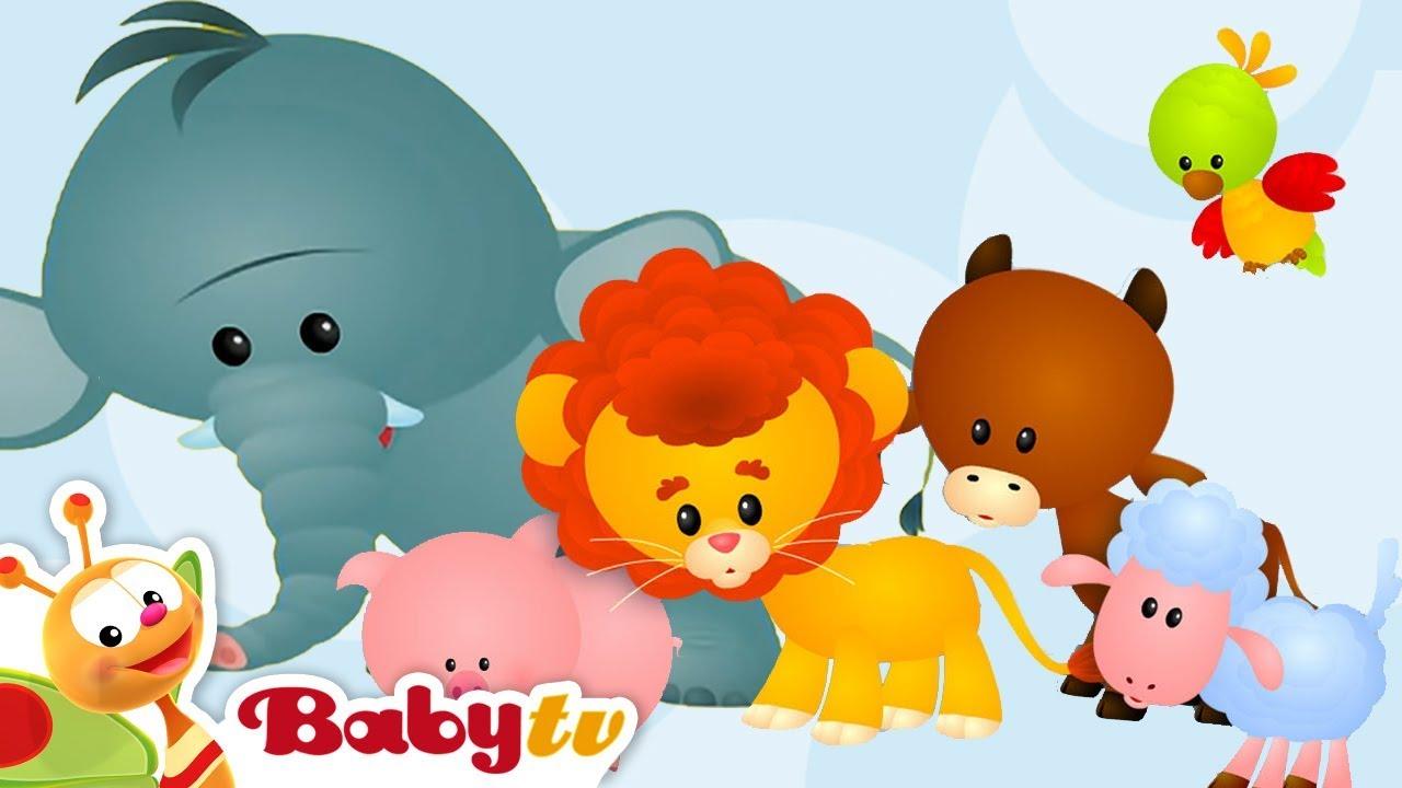 baby tv çizgi film