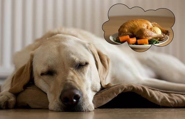 what-do-dogs-dream-about-and-the-science-of-sleep