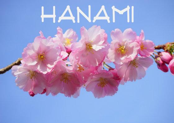 hanami-titlea